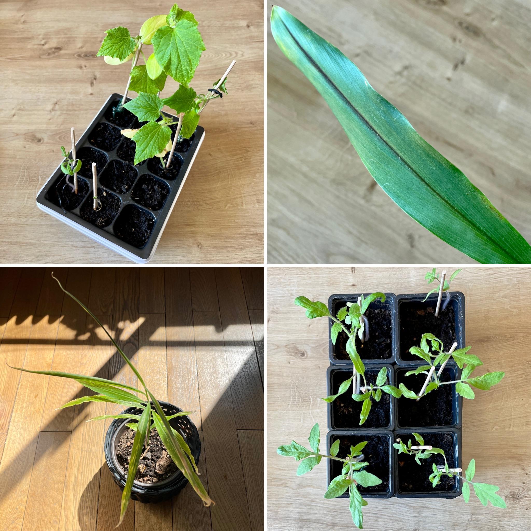 6F109457 C112 4D61 B373 2B6ACE0D0C13 - The gardener's maieutics