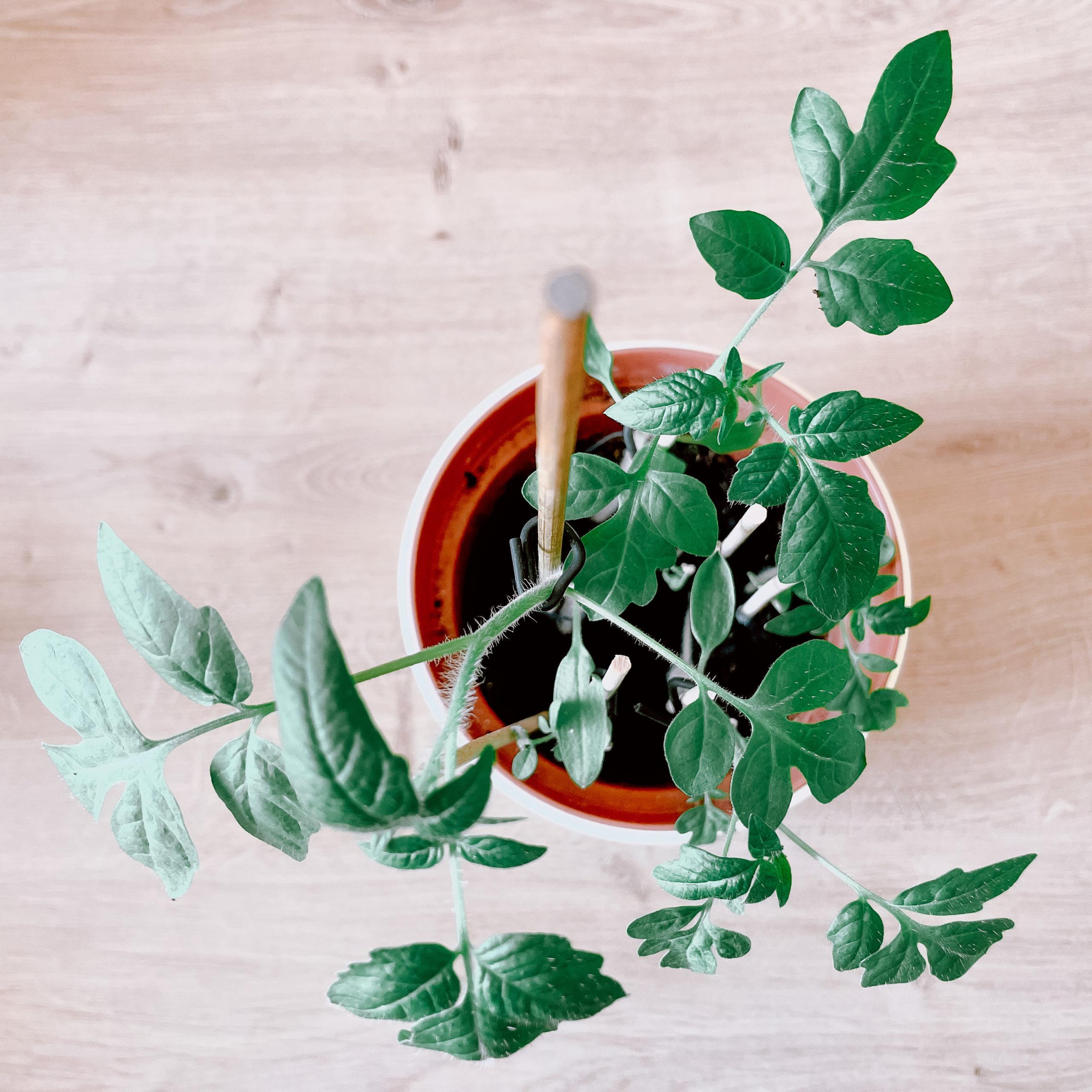 IMG 9985 scaled - The gardener's maieutics